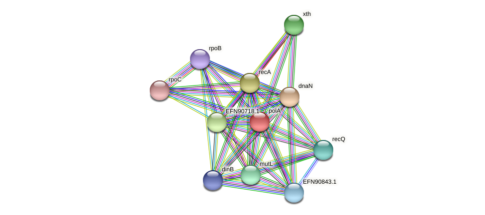 polA protein (Prevotella amnii) - STRING interaction network
