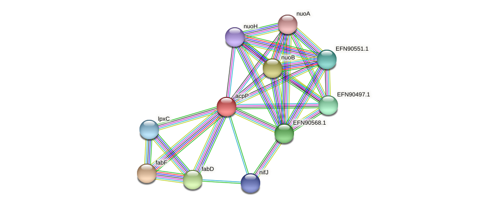 HMPREF9018_1062 protein (Prevotella amnii) - STRING interaction network