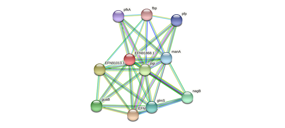 HMPREF9018_1090 protein (Prevotella amnii) - STRING interaction network