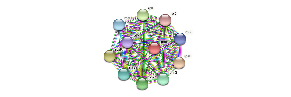 rpmF protein (Prevotella amnii) - STRING interaction network