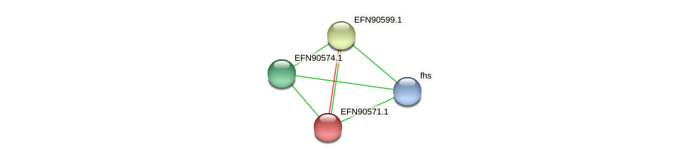 HMPREF9018_1271 protein (Prevotella amnii) - STRING interaction network