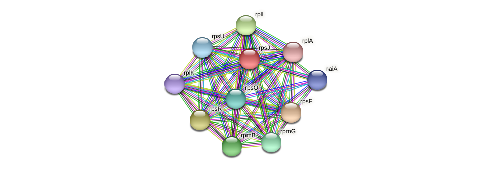 rpsJ protein (Prevotella amnii) - STRING interaction network