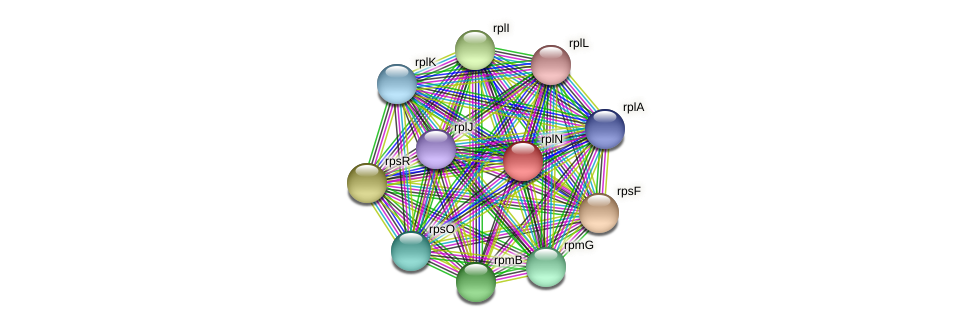 rplN protein (Prevotella amnii) - STRING interaction network
