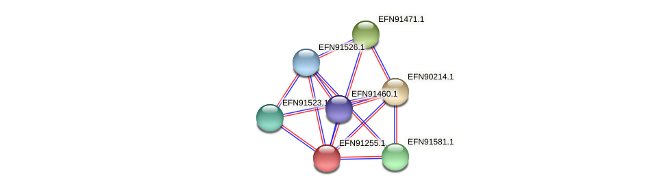HMPREF9018_1466 protein (Prevotella amnii) - STRING interaction network