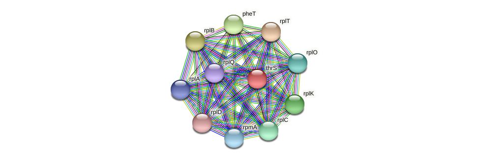 thrS protein (Prevotella amnii) - STRING interaction network