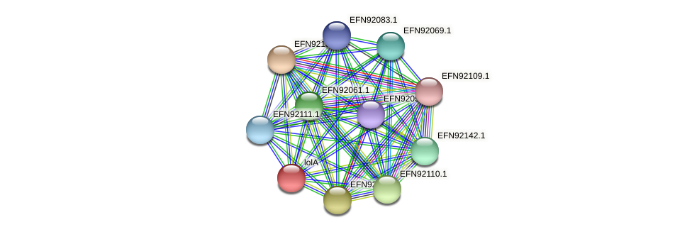 lolA protein (Prevotella amnii) - STRING interaction network