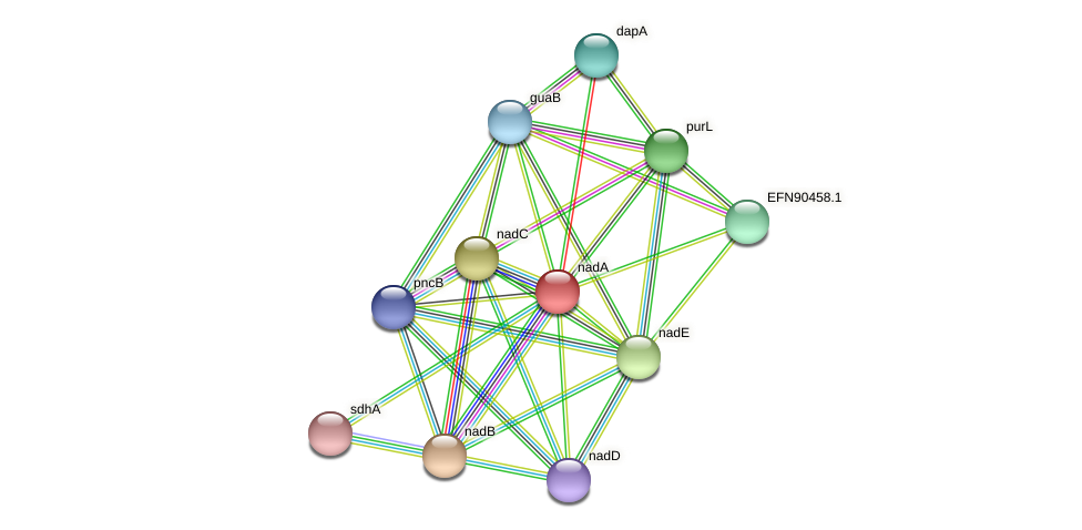 nadA protein (Prevotella amnii) - STRING interaction network