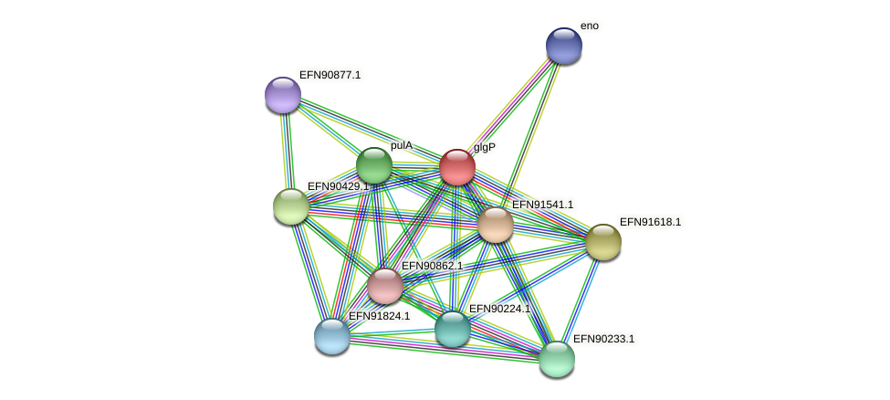 glgP protein (Prevotella amnii) - STRING interaction network