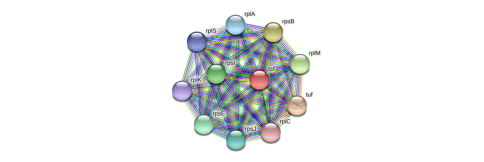 tsf protein (Prevotella amnii) - STRING interaction network