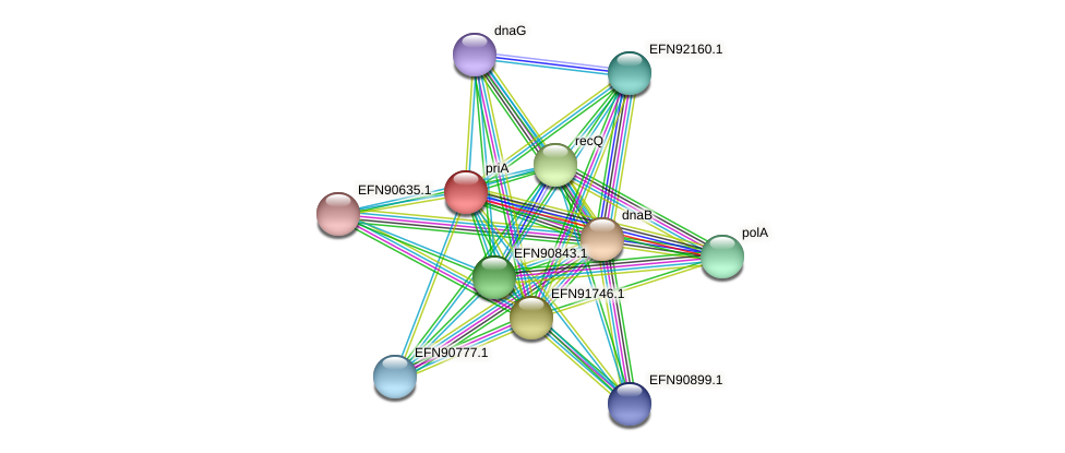 priA protein (Prevotella amnii) - STRING interaction network