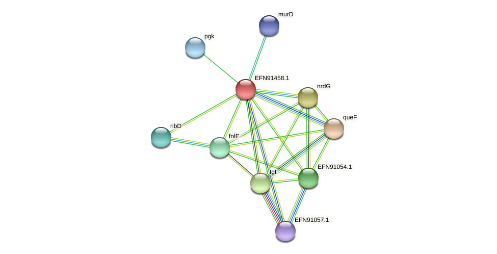 HMPREF9018_1748 protein (Prevotella amnii) - STRING interaction network