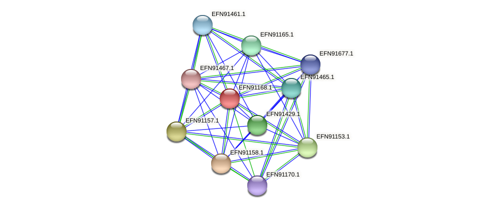 HMPREF9018_1768 protein (Prevotella amnii) - STRING interaction network