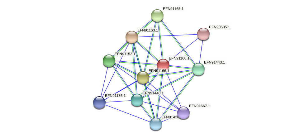 HMPREF9018_1773 protein (Prevotella amnii) - STRING interaction network