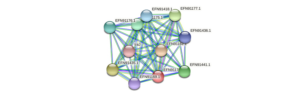 HMPREF9018_1787 protein (Prevotella amnii) - STRING interaction network