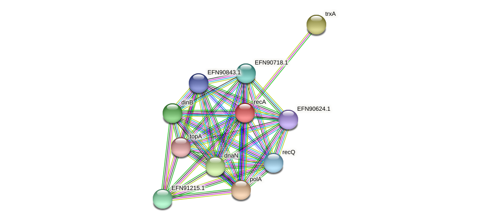 recA protein (Prevotella amnii) - STRING interaction network