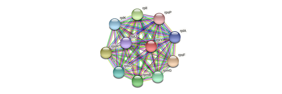 ctc protein (Prevotella amnii) - STRING interaction network