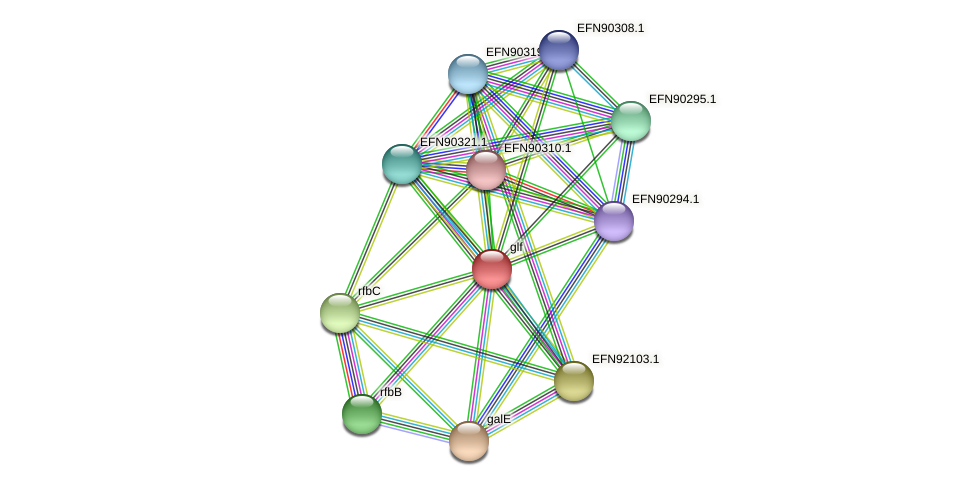 glf protein (Prevotella amnii) - STRING interaction network