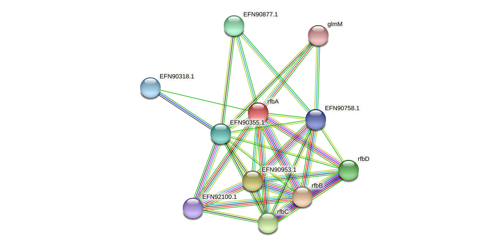 rfbA protein (Prevotella amnii) - STRING interaction network