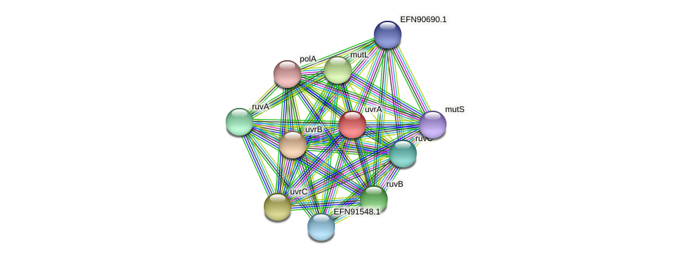 HMPREF9018_1979 protein (Prevotella amnii) - STRING interaction network