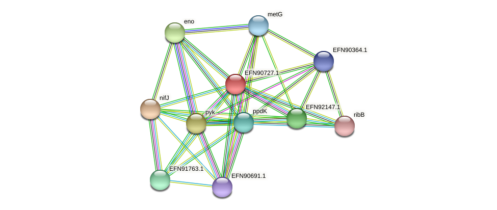 HMPREF9018_1989 protein (Prevotella amnii) - STRING interaction network