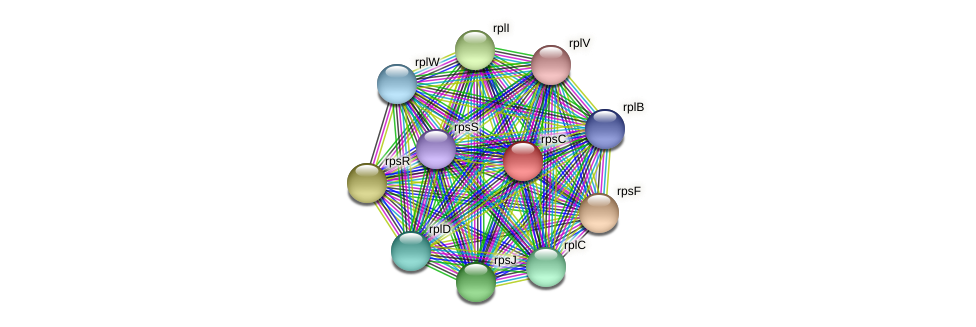 rpsC protein (Midichloria mitochondrii) - STRING interaction network