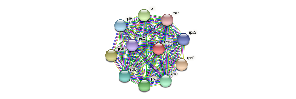 rpsN protein (Midichloria mitochondrii) - STRING interaction network