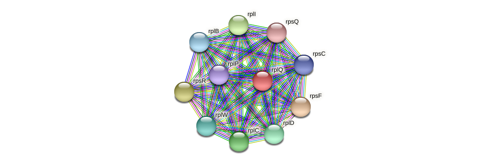 rplQ protein (Midichloria mitochondrii) - STRING interaction network