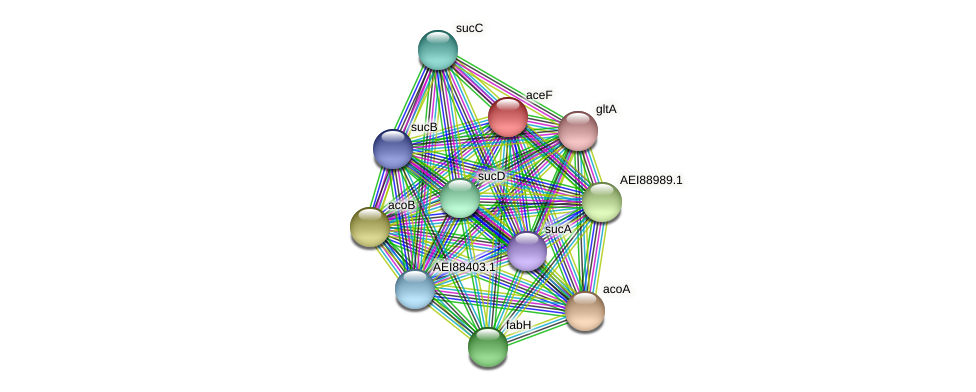 aceF protein (Midichloria mitochondrii) - STRING interaction network