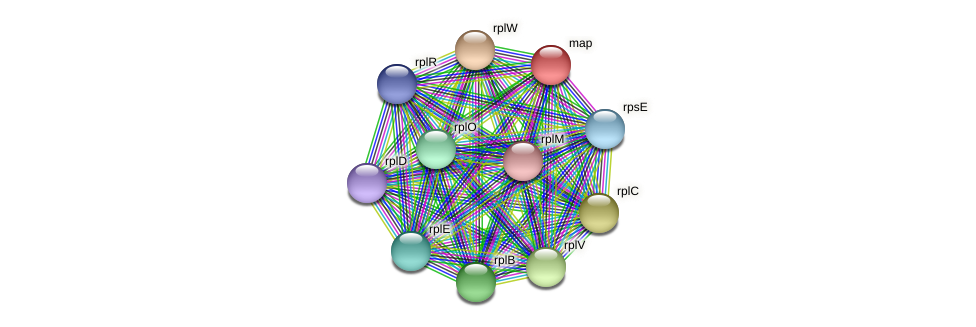 map protein (Midichloria mitochondrii) - STRING interaction network
