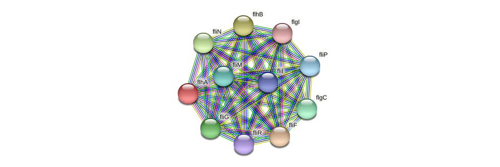 flhA protein (Midichloria mitochondrii) - STRING interaction network