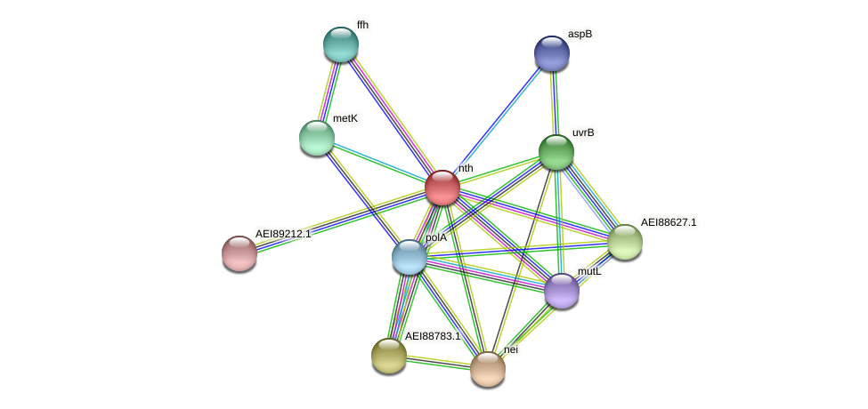 nth protein (Midichloria mitochondrii) - STRING interaction network