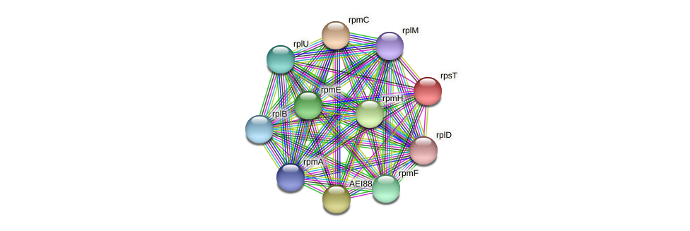 rpsT protein (Midichloria mitochondrii) - STRING interaction network