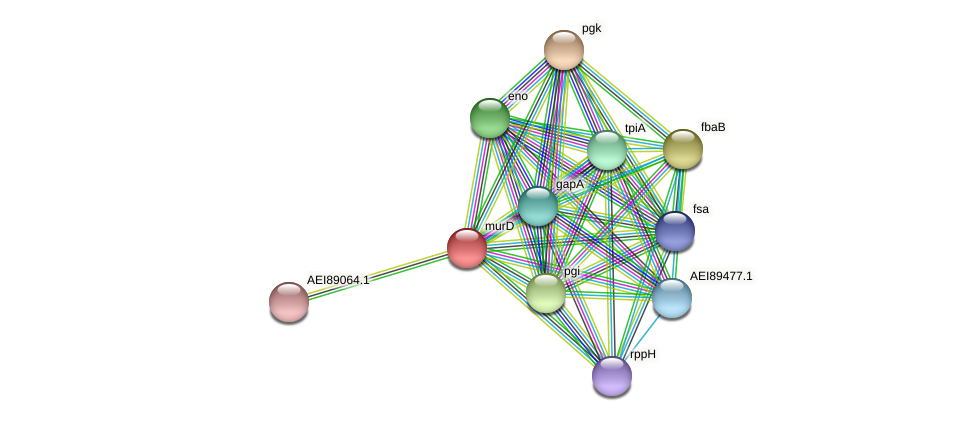 gpmI protein (Midichloria mitochondrii) - STRING interaction network