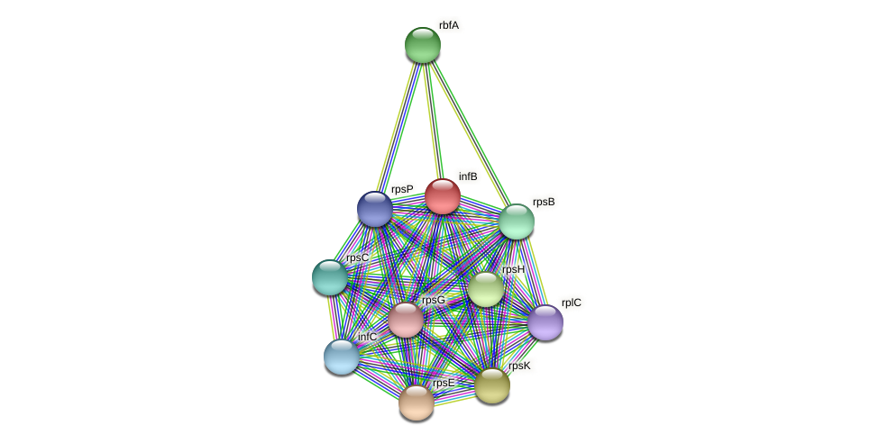 infB protein (Midichloria mitochondrii) - STRING interaction network
