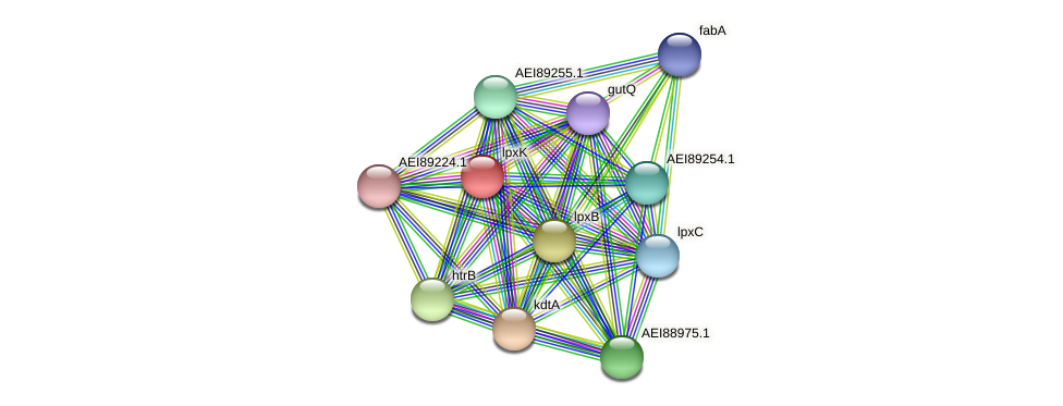 lpxK protein (Midichloria mitochondrii) - STRING interaction network
