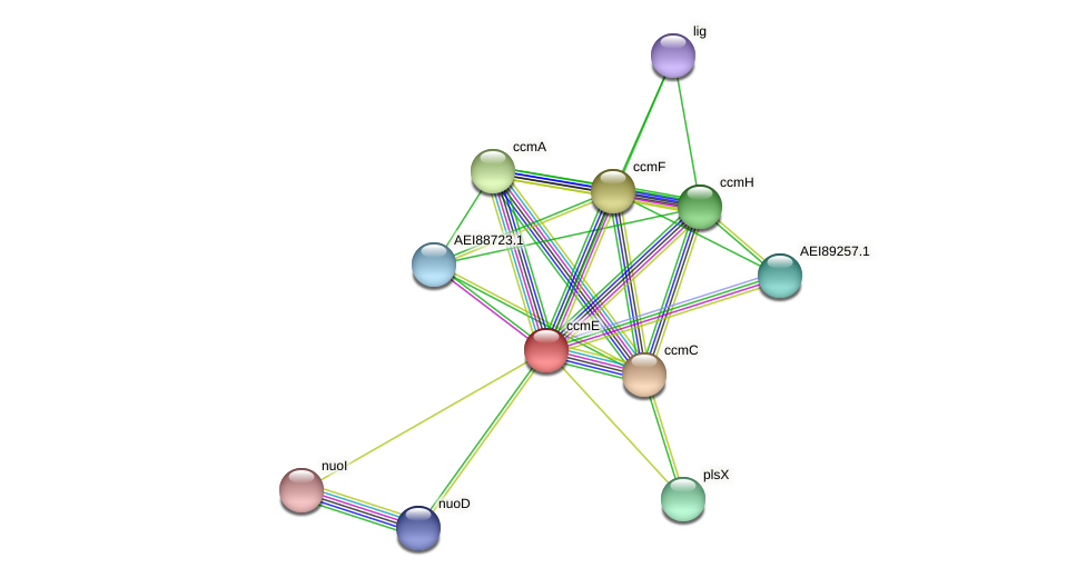 ccmE protein (Midichloria mitochondrii) - STRING interaction network