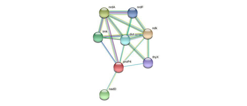 proP4 protein (Midichloria mitochondrii) - STRING interaction network