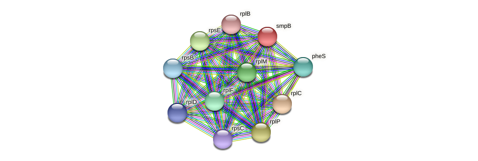smpB protein (Midichloria mitochondrii) - STRING interaction network