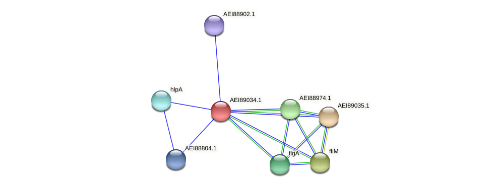 midi_00743 protein (Midichloria mitochondrii) - STRING interaction network