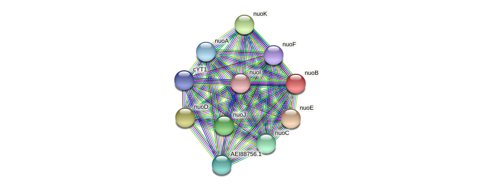 nuoB protein (Midichloria mitochondrii) - STRING interaction network