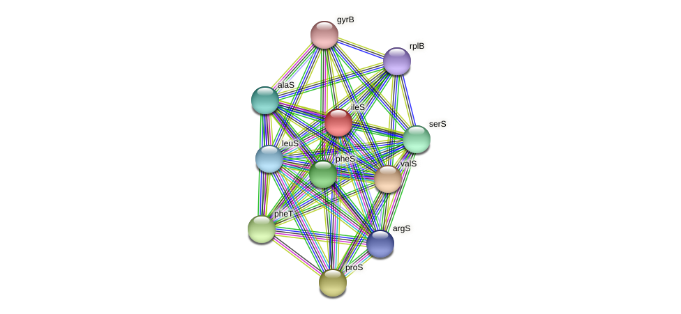 ileS protein (Midichloria mitochondrii) - STRING interaction network