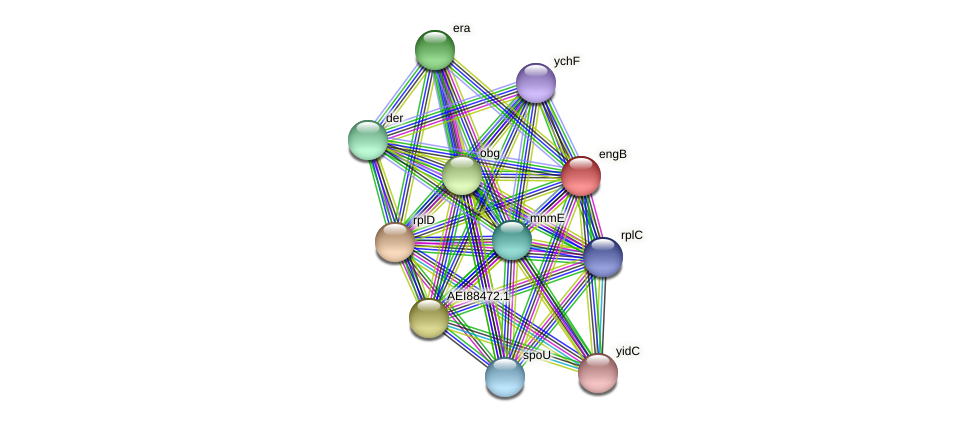 engB protein (Midichloria mitochondrii) - STRING interaction network