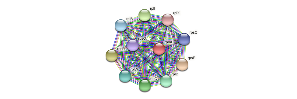 rpmH protein (Midichloria mitochondrii) - STRING interaction network