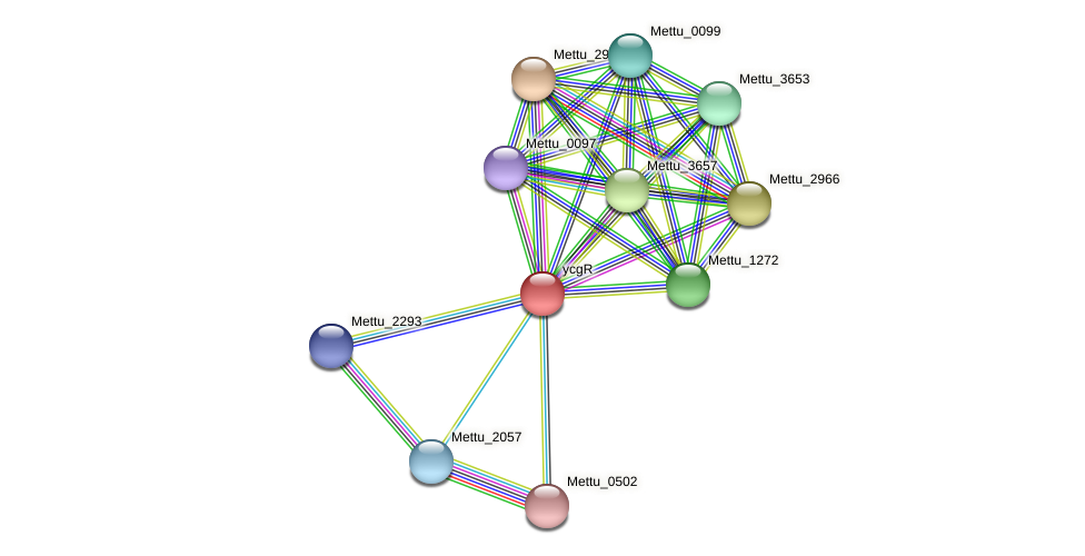 Mettu_0050 protein (Methylobacter tundripaludum) - STRING interaction network