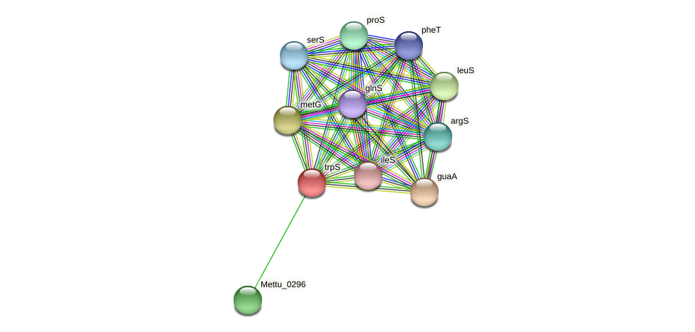trpS protein (Methylobacter tundripaludum) - STRING interaction network