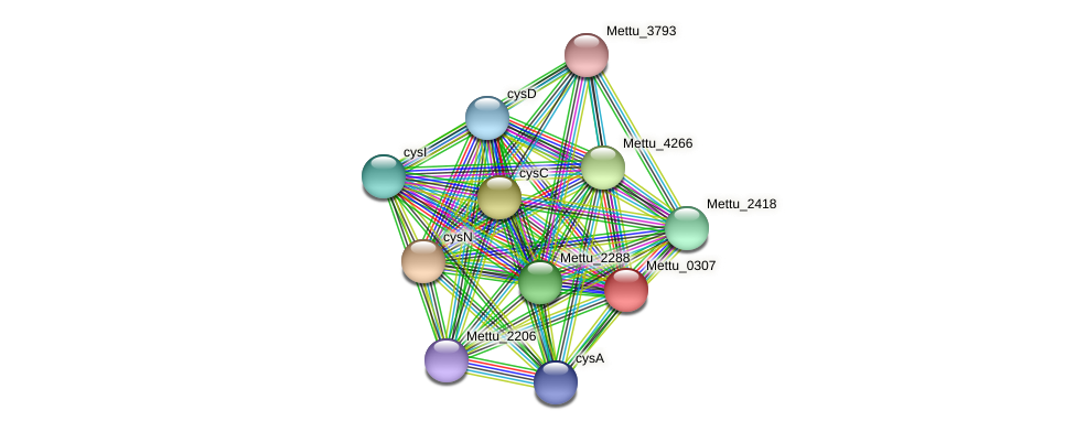 Mettu_0307 protein (Methylobacter tundripaludum) - STRING interaction network