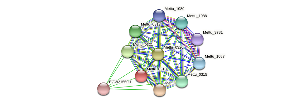 Mettu_0318 protein (Methylobacter tundripaludum) - STRING interaction network