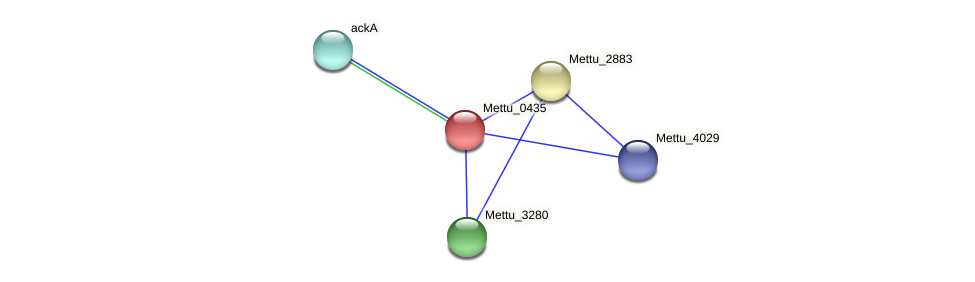 Mettu_0435 protein (Methylobacter tundripaludum) - STRING interaction network