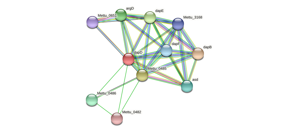 dapD protein (Methylobacter tundripaludum) - STRING interaction network