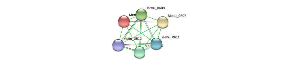 Mettu_0608 protein (Methylobacter tundripaludum) - STRING interaction network